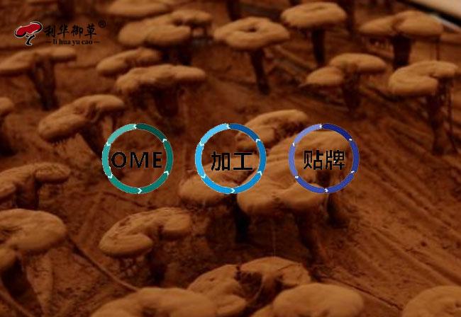 灵芝孢子粉代工,灵芝孢子粉oem贴牌
