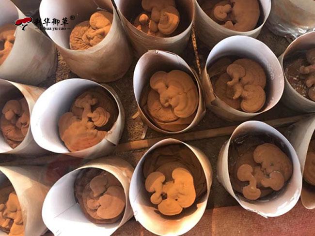利华御草,灵芝产业园,灵芝孢子粉