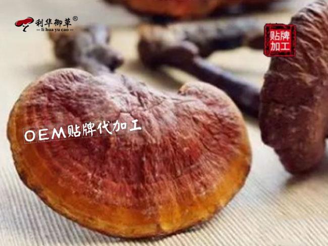 灵芝孢子油,灵芝孢子油销售旺季,利华御草